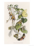 Feasting and Fun Among the Fuchsias, Fairies and Elves are Visited by Butterflies Giclee Print by Richard Doyle