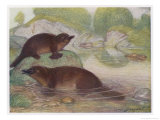 Ornithorhynchus Anatinus Duck-Billed Platypus Giclee Print by Louis A. Sargent