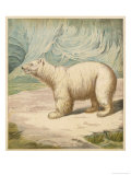 Polar Bear Stands in an Icy Setting Giclee Print by A. Baxter