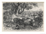 At La Rochette Three Country People Bitten by a Rabid Wolf Die in Agony Giclee Print by A. Ferdinandus