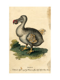 Dodo Giclee Print by Harrison Cluse
