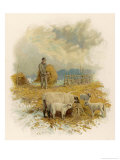 Shepherd Brings a Bale of Hay to His Flock in Winter- Time Giclee Print by Phillips Brooks