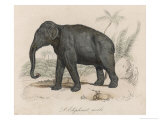Male Indian Elephant Giclee Print by Victor Jean Adam