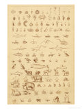 The Progress of Evolution from Amoebas to You and Me as Displayed by the Fossil Record Giclee Print by A. Dusmenil