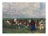 Cattle Farming in Uruguay Pedigree Herefords Giclee Print by A.s. Forrest