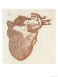 Diagram of a Human Heart Giclee Print by Dodd