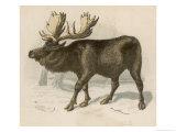 Moose or Elk Giclee Print