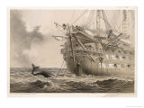 "The First Unsuccessful Cable is Laid by Hms ""Agamemnon"": an Inquisitive Whale Crosses the Line Giclee Print by Robert Dudley"