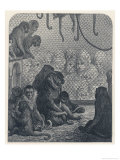 Forlorn Group of Monkeys Gaze out of Their Cage Giclee Print by Gustave Doré