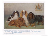 Four Types of King Charles Clevedon Champions Giclee Print by Frances C. Fairman