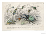 The Hercules Beetle Scarabaeus Tityus and Others Depicted in Their Natural Habitat Giclee Print by J. Bishop