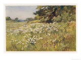 Clump of Wild Daisies in a Spring Meadow Giclee Print by Berenger Benger