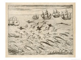 Variety of Fish Flying Fish Whales and Seals Seen by Ships En Route to India Giclee Print by Theodor de Bry