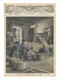 Sorting Silk Cocoons for Size and Quality in Italy Giclee Print by G. Bartoletti