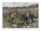Two Red Cross Rescue Dogs a German Shepherd Giclee Print by Louis Agassiz Fuertes