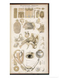 Various Diagrans of the Organs of the Senses Reproduction procédé giclée par J.s. Cuthbert
