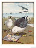 Common Gulls on a Beach Giclee Print by W. Foster