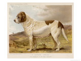 Fred Grahams Smooth St. Bernard Abbess Giclee Print by Charles Burton Barber