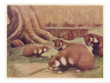 Examples of the Rhine Hamster Giclee Print by Louis A. Sargent