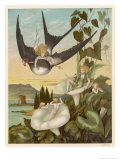 Thumbkinetta (Tommelise) Rides on a Swallow's Back Giclee Print by Eleanor Vere Boyle