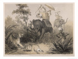 British in India Shooting a Tiger from Elephants Giclee Print by Captain G.f. Atkinson