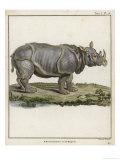 Fine Early Engraving of an African Rhinoceros Wydruk giclee autor Benard