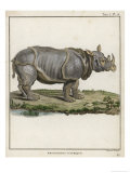 Fine Early Engraving of an African Rhinoceros Premium Giclee Print by  Benard
