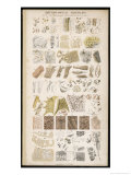 Microscopic Structure of the Texture of Various Parts of the Body Giclee Print by J.s. Cuthbert
