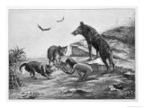 Feral Child Quarrelling with Wolf Cubs Over Food 5 of 5 Giclee Print by Harry B. Neilson