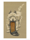 White Scots Terrier with a Black Slipper or Shoe Giclee Print by Cecil Aldin