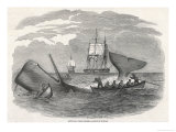 Whaling in the South Seas Giclee Print by W.j Linton