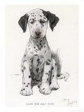 Loopy the Ugly Puppy Giclee Print by Cecil Aldin