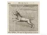 Canis, The Dog Star Giclee Print by Gaius Julius Hyginus