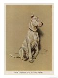 The Ugliest Dog in the Show Giclee Print by Cecil Aldin