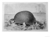 Gigantic Forerunner of the Armadillo from the Pleistocene Period in South America Giclee Print by J. Smit