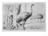 Dinornis Giganteus (Giant Moa) is About to be Attacked by a Native New Zealander Giclee Print by J. Smit