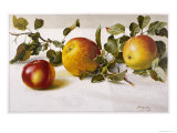 Apples and a Bit of Foliage Giclee Print by Moettler