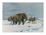 Mammoth Herd During the Ice Age Stampa giclée di Wilhelm Kuhnert