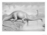 Diplodocus CarnegII Which at 28 Metres Long was the Greatest Known Dinosaur Giclee Print by J. Smit