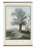 Willow Tree at the Side of a Pond Giclee Print by  Piringer