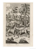 Cattle Farming: Rival Bulls Battle for the Leadership of the Herd Giclee Print by Michael van der Gucht