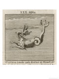 The Constellation of Pistrix the Sea Monster Giclee Print by Gaius Julius Hyginus