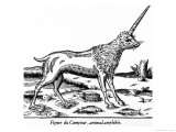 The Figure of the Camphur an Amphibious Beast Found in Ethiopia a Species of Unicorn Giclee Print by Ambroise Pare