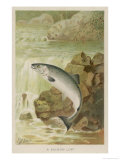 Leaping Salmon Premium Giclee Print by P. J. Smit