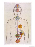 The Seven Chakras and the Streams of Vitality Giclee Print by C.w. Leadbeater