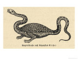 Two-Legged Non-Flying Dragon Perceived as an Animal Species Rather Than an Otherworldly Monster Giclee Print by Athanasius Kircher