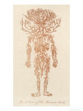 The Arteries of the Human Body Premium Giclee Print by Ebenezer Sibly