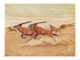 Herd of Antelopes (Beisa Oryx) Running Across the Plains with a Lion in Pursuit Giclee Print by Louis A. Sargent