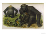 An Adult Male an Adult Female and a Young Male Giclee Print by  Hanhart