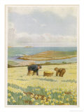 Picking Daffodils for the Market St. Mary's Scilly Isles Giclee Print by Jessie Mothersole